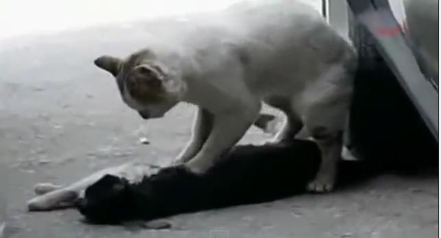 マッサージ猫